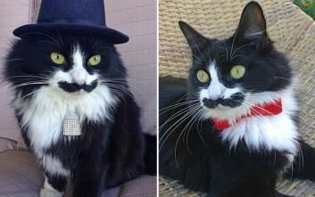 Η γάτα με το «μουστάκι» που έχει γίνει πρώτη φίρμα