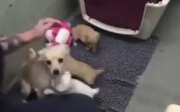 Θηλυκό σκυλί που εγκαταλείφθηκε σε καταφύγιο ξαναβρίσκεται με τα κουτάβια του