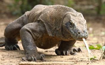 Ζώα που μπορούν και κλωνοποιούνται!