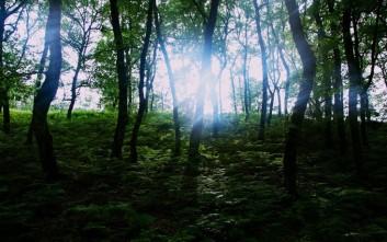 Δάσος Φολόης, ένας παράδεισος στην καρδιά της Πελοποννήσου