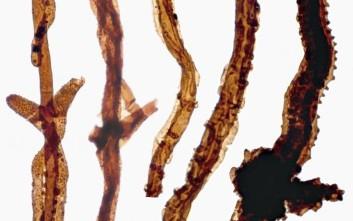 Εντόπισαν απολίθωμα μύκητα που ζούσε πριν 440 εκατ. χρόνια