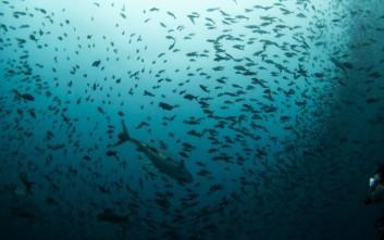 Το απίστευτο βάθος των ωκεανών σε ένα απίθανο animation