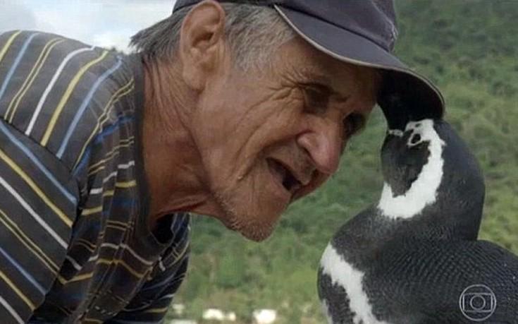 penguin3
