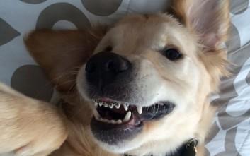 Το χαριτωμένο κουτάβι που φορά... σιδεράκια στα δόντια