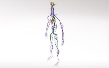 Υπερυπολογιστής προσομοιώνει την κυκλοφορία του αίματος σε όλο το σώμα