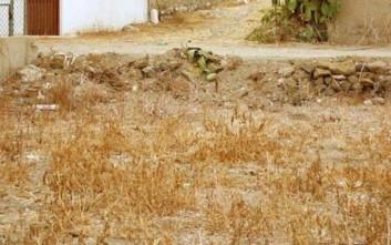 Αν μπορείτε να βρείτε τη γάτα στις φωτογραφίες είστε πολύ παρατηρητικοί