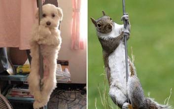 Όταν τα ζώα κάνουν... pole dancing