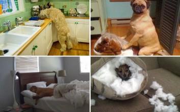 Η... κρυφή ζωή των σκύλων σε φωτογραφίες