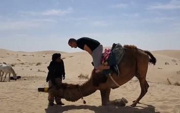 Ποτέ μην εμπιστεύεσαι μία καμήλα