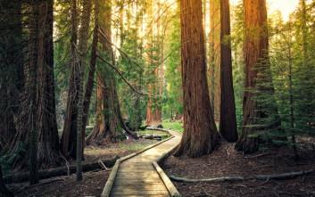 Το «Γιγάντιο Δάσος» στην Καλιφόρνια