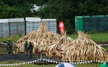 Με καύση 105 τόνων ελεφαντόδοντου «ξορκίζει» τη λαθροθηρία η Κένυα