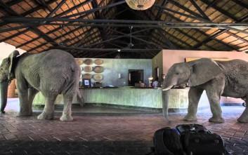 Ένας ελέφαντας στο δωμάτιο... του ξενοδοχείου σου!
