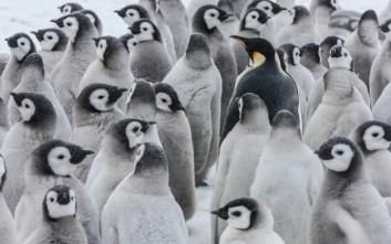 Το βίντεο της WWF για την παγκόσμια ημέρα πιγκουίνων!