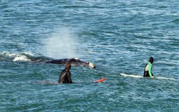 Η φάλαινα που… ήθελε να κάνει σερφ