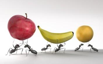 Το 2050 θα τρώμε... μυρμήγκια, ακρίδες και μέλισσες