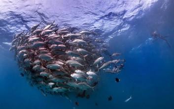 Ο θαλάσσιος «ανεμοστρόβιλος» των ψαριών