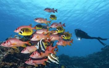 Η λεύκανση απειλεί τον Μεγάλο Κοραλλιογενή Ύφαλο