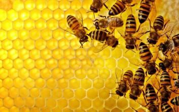 «Σώστε τις μέλισσες» φωνάζουν 1,75 εκατομμύρια Βαυαροί