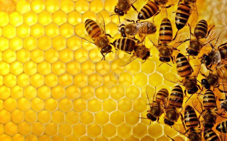 Γιατί αγαπάμε τις μέλισσες και μισούμε τις σφήκες