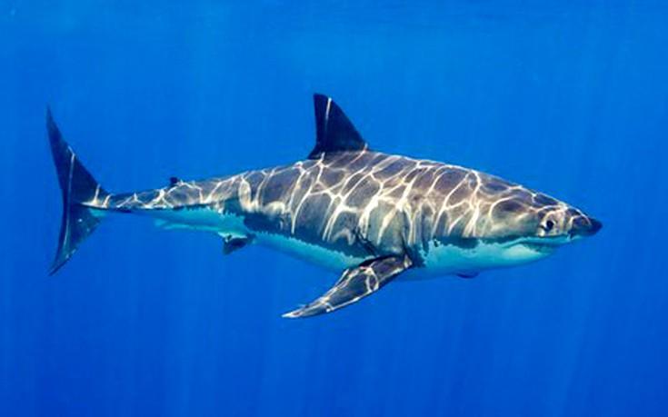 Οργή για τον άνδρα που φωτογραφήθηκε γυμνός ξαπλωμένος πάνω σε νεκρό καρχαρία