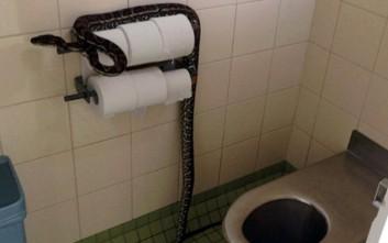 Ποτέ μην υποτιμάς ένα φίδι