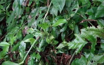 Το φυτό με το όνομα Τζέιμς Μποντ και η σφήκα Μπραντ Πιτ