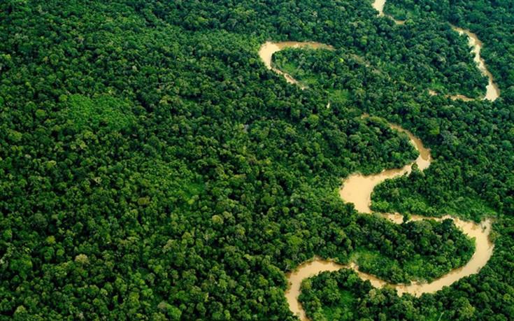 Ο Αμαζόνιος στο Περού  (Credit: Mark Bowler/naturepl.com)