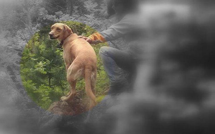 Χάθηκε σκυλάκι στα Μελίσσια Αττικής