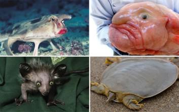 Τα πιο περίεργα ζώα του πλανήτη