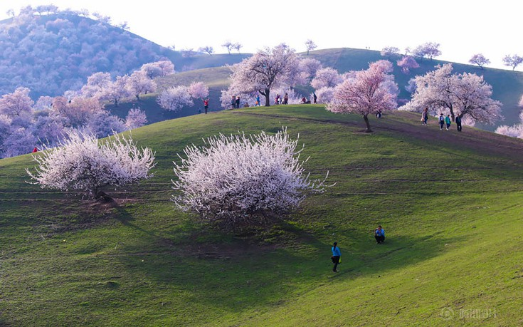 apricot-valley-12