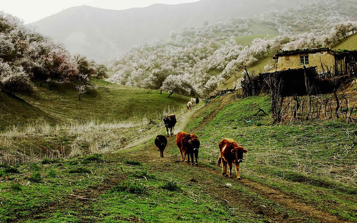 apricot-valley-13