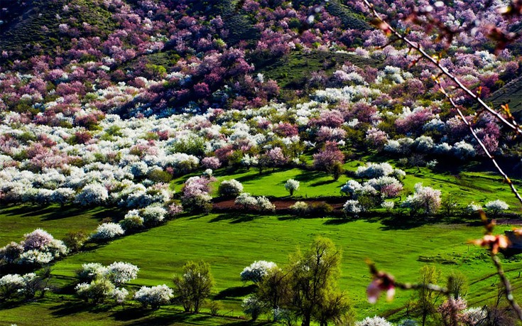 apricot-valley-3