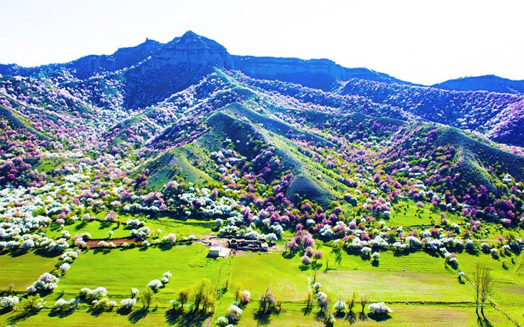 apricot-valley-5