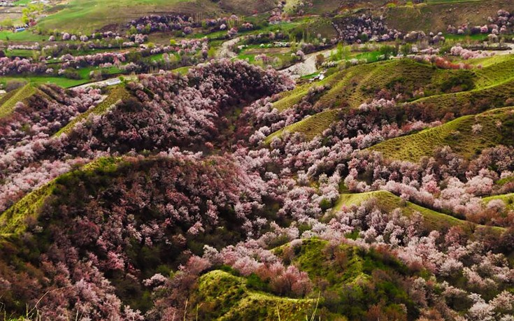 apricot-valley-6