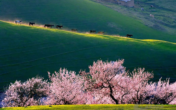 apricot-valley-7