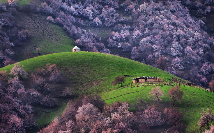 apricot-valley-8