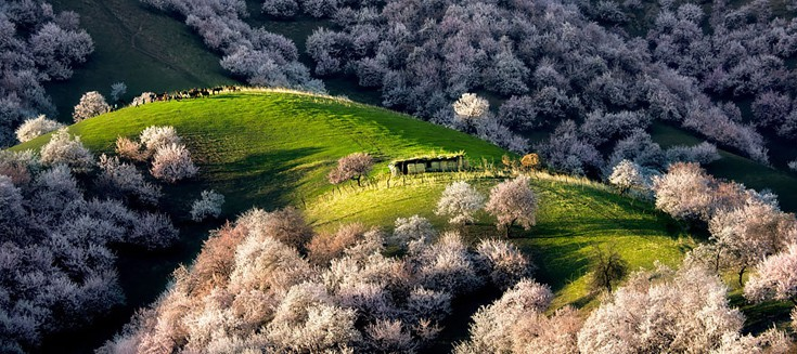 apricot-valley-9