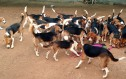 Σκύλοι πειραματόζωα βλέπουν το φως του ήλιου για πρώτη φορά