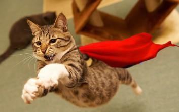 Απίθανες γάτες που έσωσαν ανθρώπινες ζωές