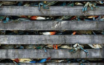 Παράνομη αποθήκη με 638 κιλά καβούρια στη Θεσσαλονίκη