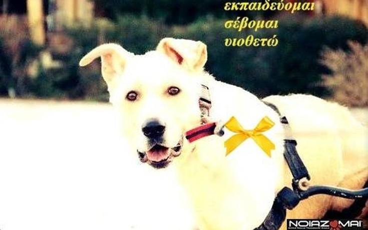 Φορέστε κίτρινη κορδέλα στον σκύλο, αν δεν θέλετε να τον χαϊδεύουν