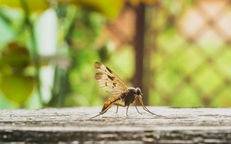 Τα φυτά που διώχνουν τα κουνούπια