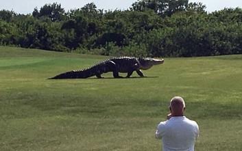 Αλιγάτορας βολτάρει ανέμελος σε γήπεδο γκολφ στη Φλόριντα