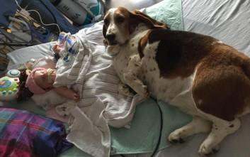 Η μικρή Nora «σβήνει» και ο σκύλος αρνείται να φύγει από το πλευρό της