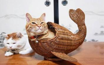 Παράξενα μέρη που μπορεί να βρεις μια γάτα...