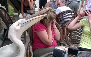 «Πεινασμένοι» πελεκάνοι... επιτίθενται σε τουρίστρια