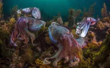 Χταπόδια, καλαμάρια και σουπιές «κατακτούν» τις θάλασσες της Γης