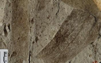 Ανακάλυψαν απολιθωμένους μικροοργανισμούς - γίγαντες