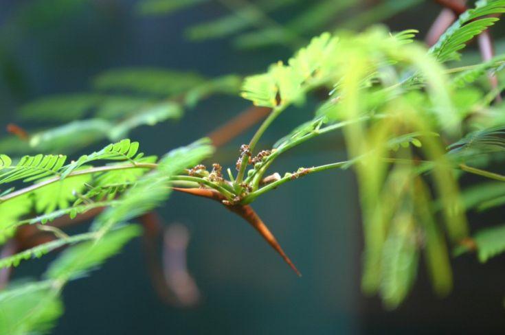 τσιμπήματα εντόμων έντομα