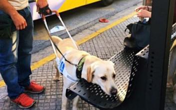 Οδηγός λεωφορείου κατέβασε τυφλή γυναίκα επειδή είχε μαζί σκύλο – οδηγό